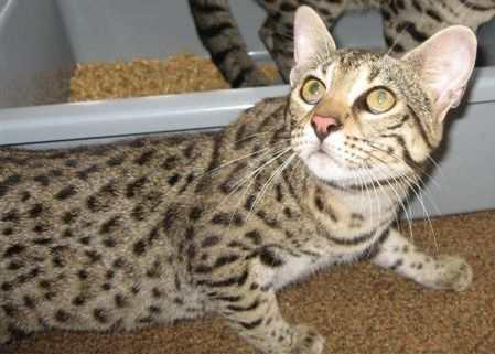 El Gato Safari