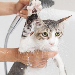 Cómo bañar a su gato (y averiguar el mejor champú para usar)