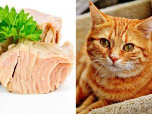 Cómo hacer la mejor comida casera para gatos