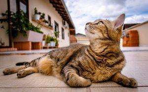 ¿Cuánto cuesta un gato? El desglose del costo anual de tener un gato