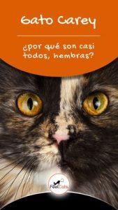 Datos sobre los gatos de carey | Lo que necesitas saber sobre las tortugas (+ una guía sobre cómo cuidar a un gatito de tortuga)