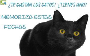 Día Nacional del Gato Negro: ¿Qué es y cuándo se celebra?