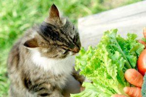 Las mejores verduras para los gatos: ¿Pueden comerlas? Beneficios y efectos secundarios
