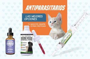 Los mejores tratamientos para gatos saludables para entrenar (y mimar) a gatos y gatitos