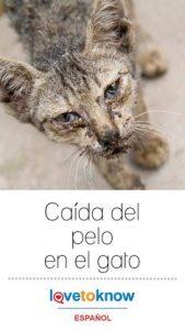 Oraciones comunes para perros y gatos perdidos, enfermos, heridos o moribundos