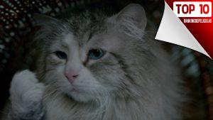 Películas de gatos: Las mejores películas para que las vean los amantes de los gatos