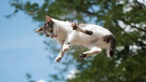 Qué hacer cuando su gato muere en casa: Qué hacer con el cuerpo, los arreglos finales y las opciones de conmemoración