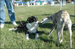 Introducciones adecuadas de perro a perro en el hogar