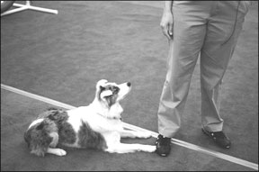 Entrenamiento de perros con técnicas positivas