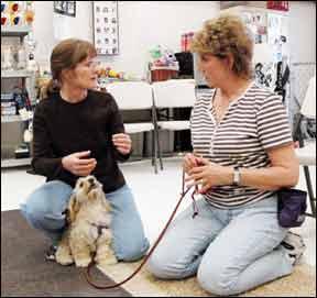 Consejos para convertirse en un entrenador de perros profesional