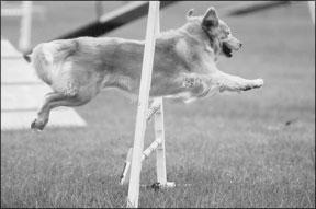 Tratamientos caseros para perros heridos