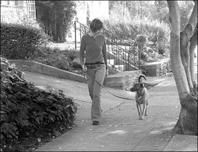 Buen paseo del perro