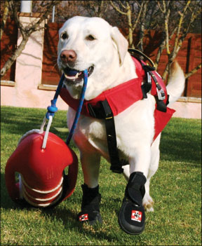 Equipo ortopédico para perros diseñado para aumentar la movilidad y el apoyo adicional