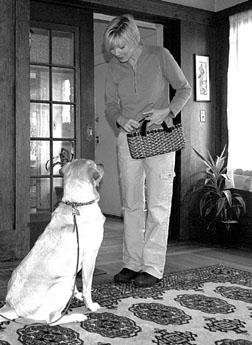 Enseñar a tu perro a saludar a la gente sin saltar