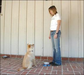 Entrenando al perro para que se quede