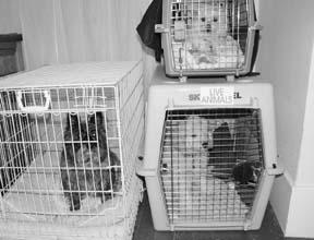 Dificultades con las jaulas de los perros