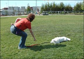 Los 5 errores más comunes en el entrenamiento de perros