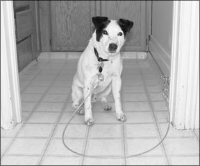 Entrena a tu perro para que salude a la gente