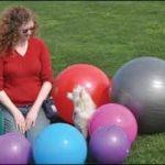 La historia de Juneau - ¡Uno de los perros sordos más felices que hayas conocido!