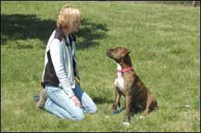 Enseñar a su perro la calma, la respiración lenta