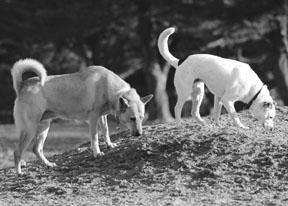 Enfermedad renal crónica en los perros