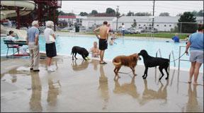 Actividades divertidas para perros