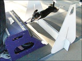 Competiciones caninas de alta energía
