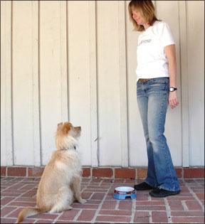Usar el tazón de tu perro como herramienta de entrenamiento