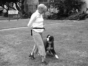 Enseñe a su perro a caminar con correa