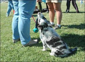 Entrenando a su perro con premios y elogios