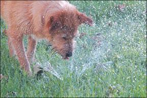 Un informe de progreso sobre el entrenamiento positivo del perro y nuestro nuevo perro Otto