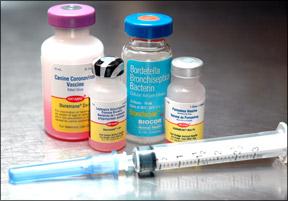 Tenga cuidado de no sobre vacunar a su perro