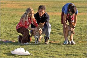 Lure Coursing: ¿Está tu perro listo para la persecución?