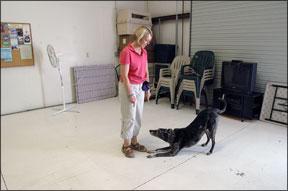 Control del estímulo canino mediante el entrenamiento positivo de perros