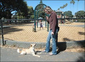 Uso de los entrenadores de perros para generalizar un comportamiento