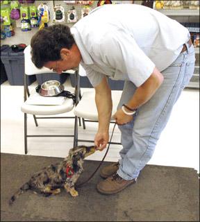 Sacar el máximo provecho de la guardería para cachorros