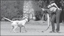 Enseñar a un perro a jugar a buscar
