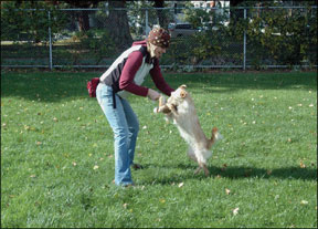 Los mejores tratamientos de entrenamiento de perros para diferentes escenarios de entrenamiento