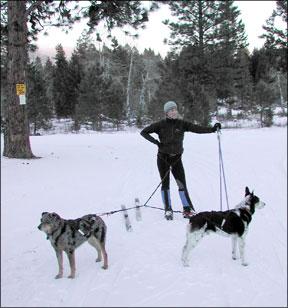 Actividades de invierno que puede disfrutar con su perro