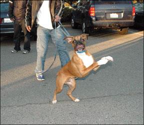 Entrenando a su perro para que no salte