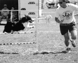 Entrenamiento de Agilidad Canina: El último deporte de equipo