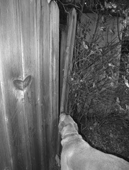 Cómo evitar que su perro se escape