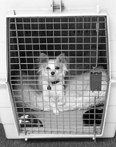 Entrenamiento en casa para perros adultos