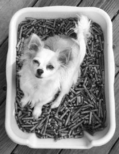 Cajas de arena de interior y de patio para perros solos en casa