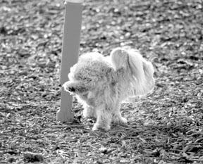 El nuevo perro deja su marca