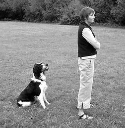 Métodos avanzados de entrenamiento de perros: Cómo desvanecer las señales y los señuelos