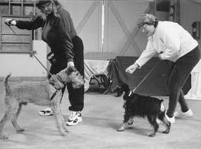 Clase canina para perros agresivos y problemáticos
