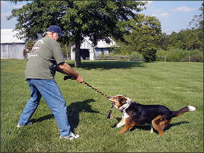 Juegos de perros para jugar si eres discapacitado físico