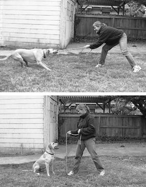 Cómo jugar al tira y afloja con tu perro