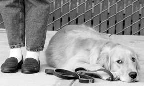 Más allá de los fundamentos del entrenamiento de perros
